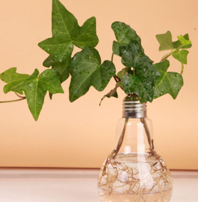 Transparent Tabletop Glass Vase Bulb Shape Hydroponic Container