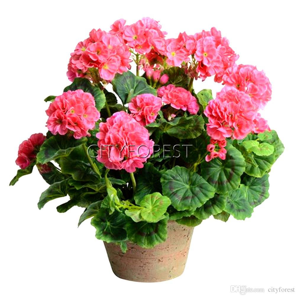 2018 Pink Geraniums Perennial Flower Seeds Super Easy Growing In Pot