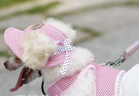 Sevimli Prenses Mesh Stil Pet Köpekler Kap Ücretsiz Gemi köpek giyim pet malzemeleri köpek aksesuarları Köpekler şapka köpekler kap pet şapka 30 adet p97