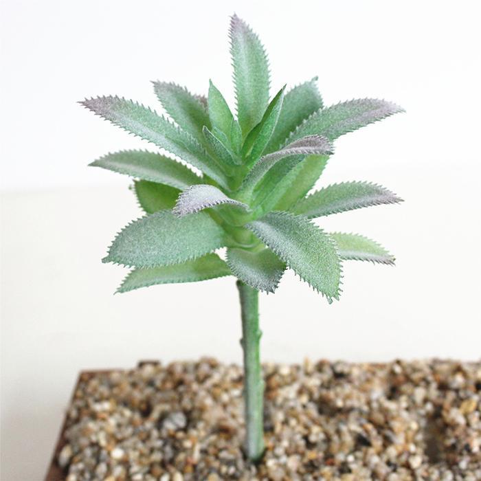 Büyüleyici Sahte Yapay Etli Bitkiler Emulational Sahte Kaktüs Bitkiler Ofis Ev Dekor Düğün Masa Danışma için Mini Çiçek Dekorasyon