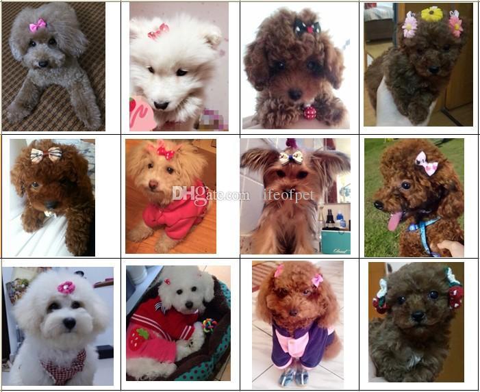 100 adet Yeni Köpek Saç Klipleri Küçük Ilmek Pet Bakım Ürünleri Mix Renkler Değişir Desenler Pet Saç Yaylar Köpek Aksesuarları