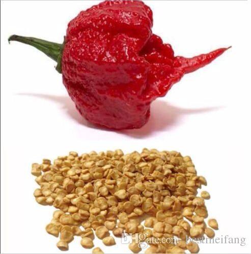 hot reaper chili seeds vegetable Fresh Rare Red pepper