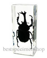 Gerçek Beetle Numune Akrilik Reçine Böcek Gömülü Eğitim Oyuncaklar Şeffaf Fare Paperweight Çocuk Biyoloji Bilim Öğrenme Setleri Hediyeler