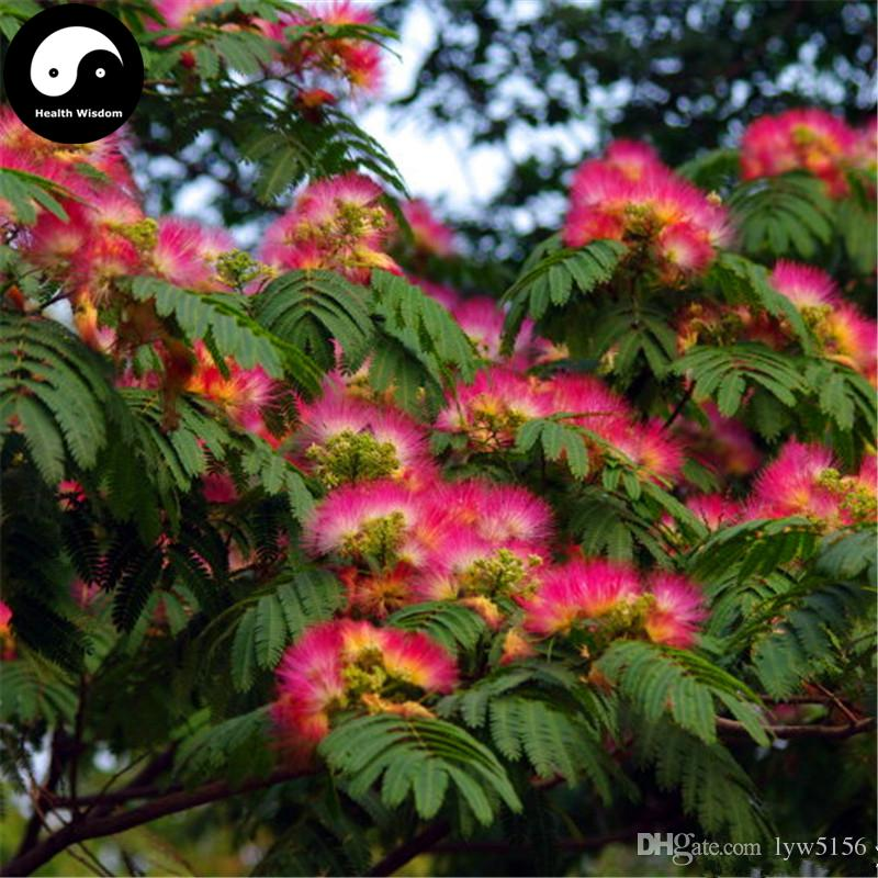 2018 Buy Albizia Julibrissin Tree Seeds Plant Silk Tree