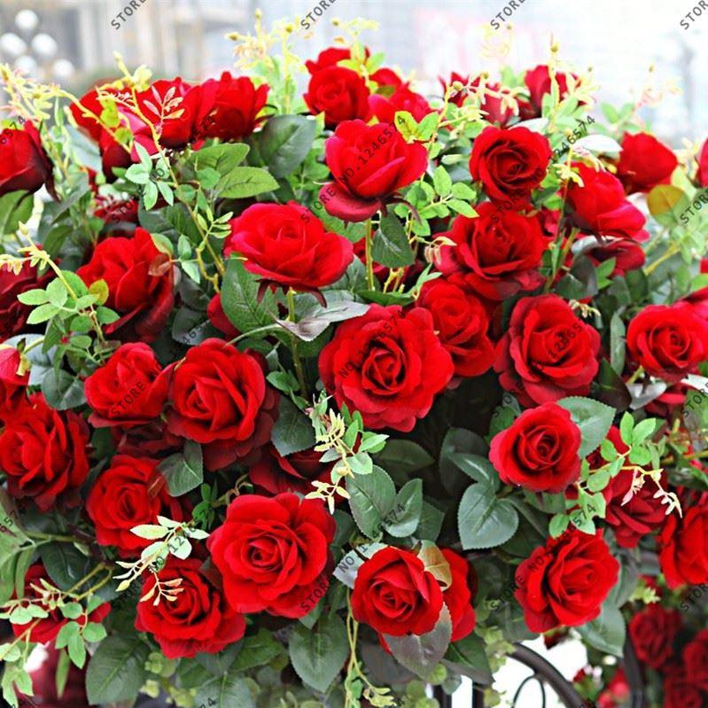 Acheter 300 Graines Abracadabra Rose Couleur Rare Fleur Magnifique