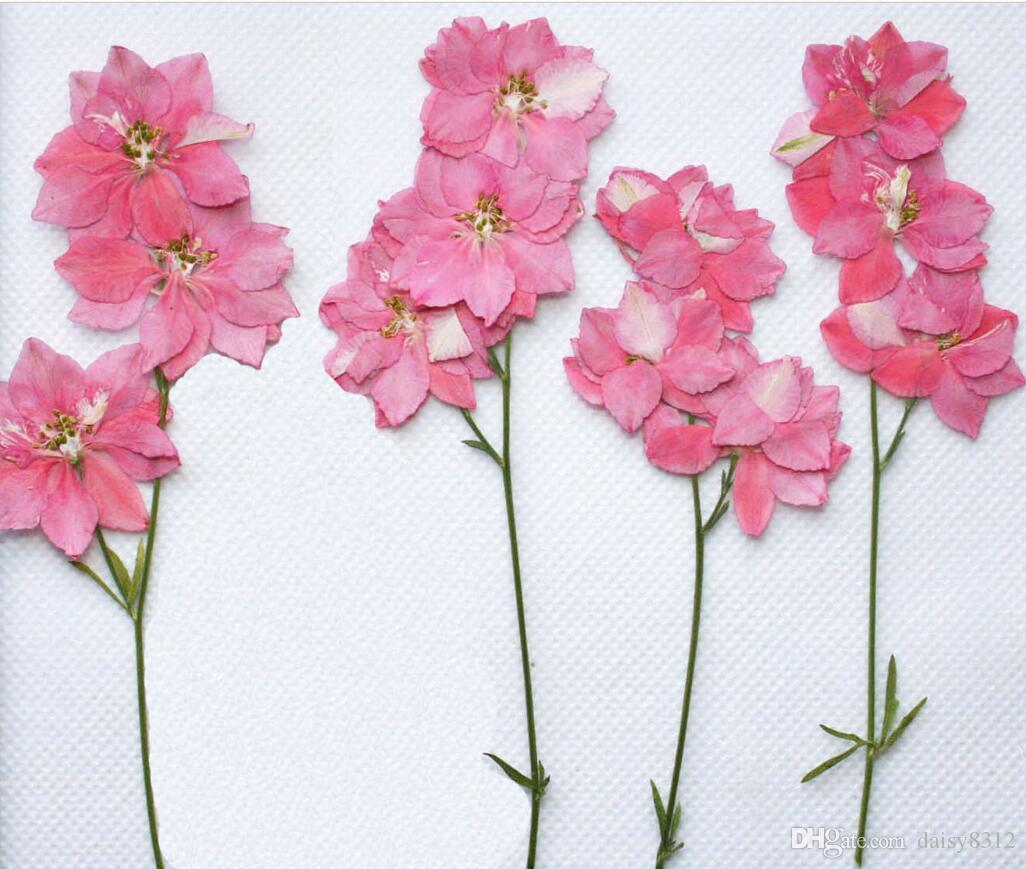 Pressed Dried Gaura Lindheimeri Flower With Branch For Epoxy Resin Pendant Necklace Jewelry Making Craft DIY Accessories
