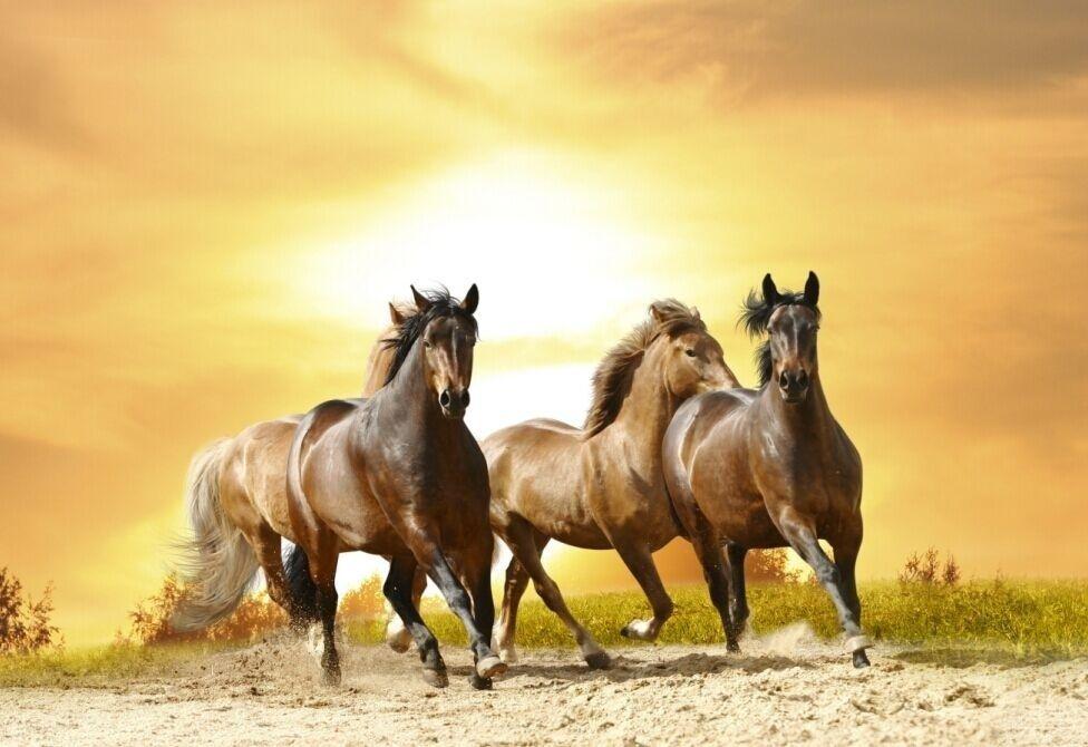 2018 Single Unframed Horses Running Sunset Animal Painting Oil ...