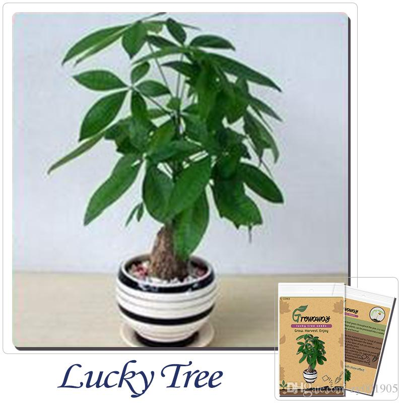 Online Cheap Indoor Potted Flowers Plants The Seed Sowing Seasons ...