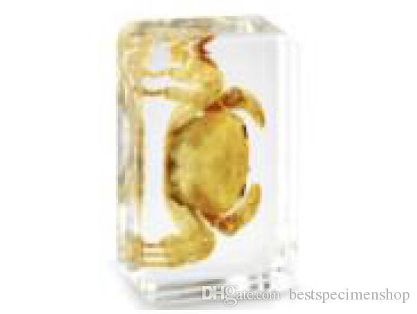 Caranguejo do Mar Specimen LearningEducation Presentes Acrílico Resina Caranguejo Embutido Transparente Mouse Paperweight Crianças Melhor Biologia Ciência Aids Ensino