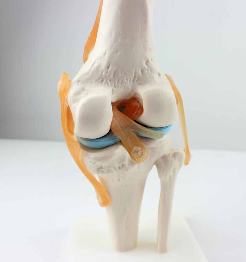 Online Cheap Wholesale Human Skeleton Knee Joint Anatomy Models ...