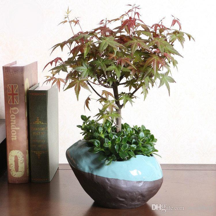 Indoor Tree Pots Online | Indoor Tree Pots for Sale