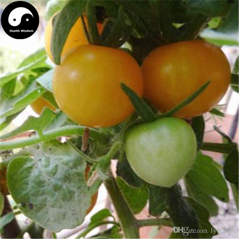 Grosshandel Kaufen Gelb Bonsai Tomaten Samen Pflanze Obst