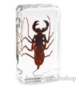 Whip Scorpion Specimen Acrylic Resin Embedded Real ScorpionBiology Teaching Science Kits Transparent Mouse Paperweight Kids New Toys&Gifts