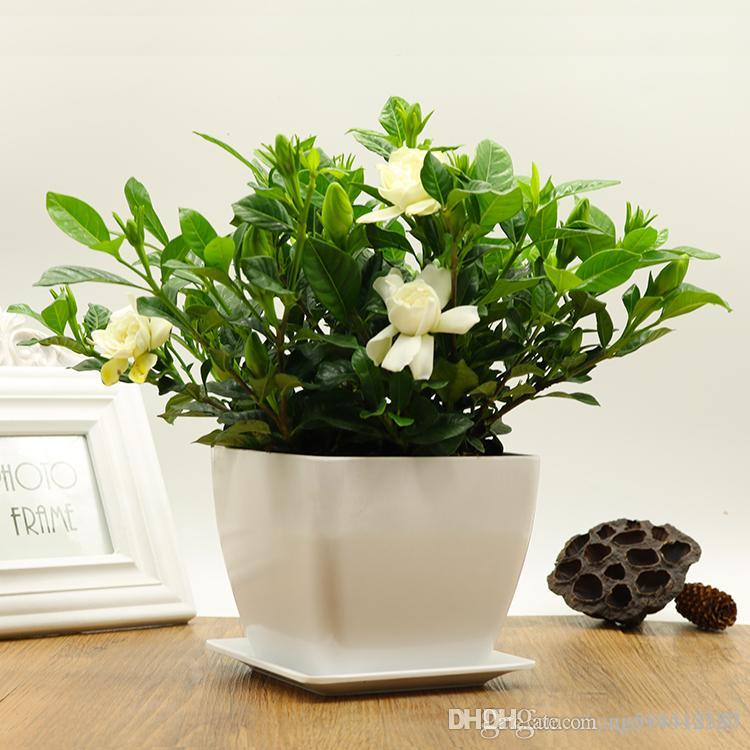 Online Cheap 20/Pcs Gardenia Potted Flower Ornamental Plant Air ...