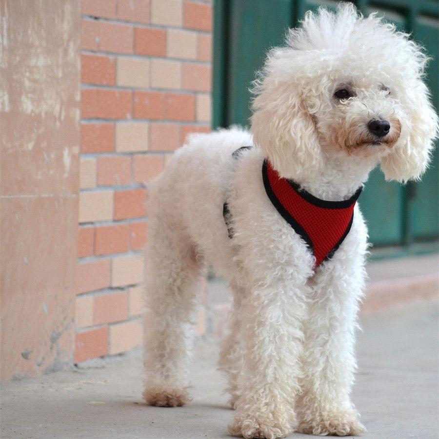 Brand new Pet dog Nylon Malha Arnês Strap Colete Gola Pequeno De Médio Porte Cachorro Conforto Harness 7 cores