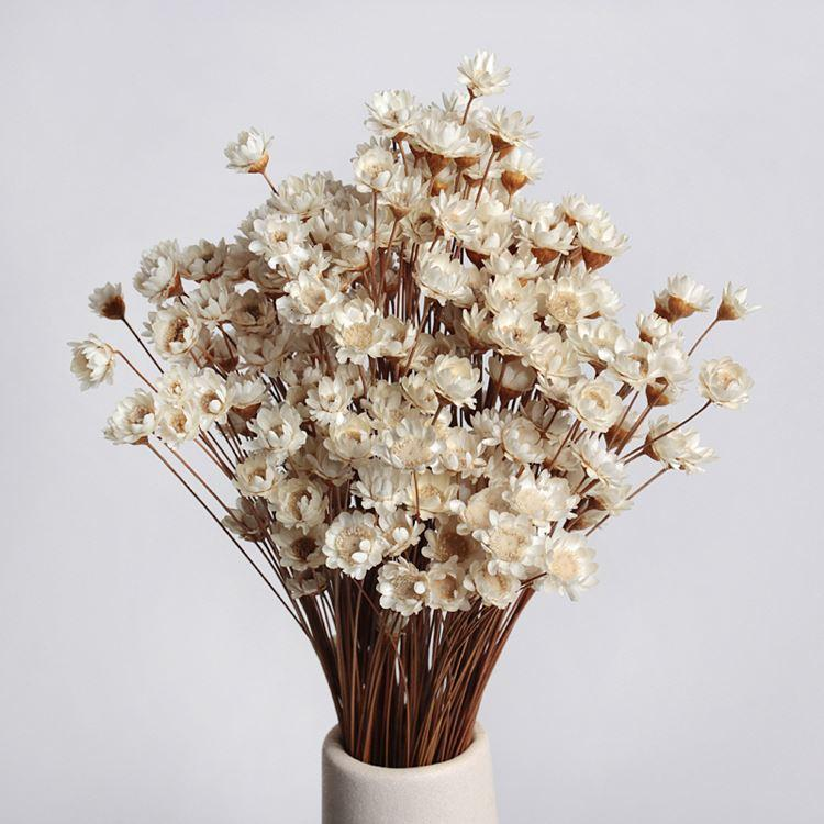 2019 New Babysbreath Wedding Decoration Dried Flowers ...