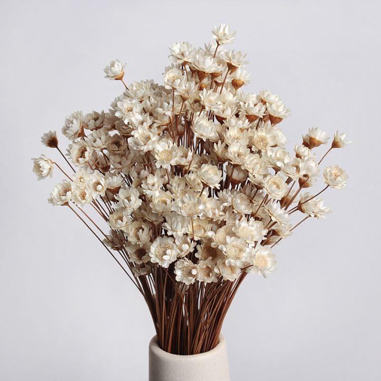 Famous New Babysbreath Wedding Decoration Dried Flowers Party Decoration  LX02