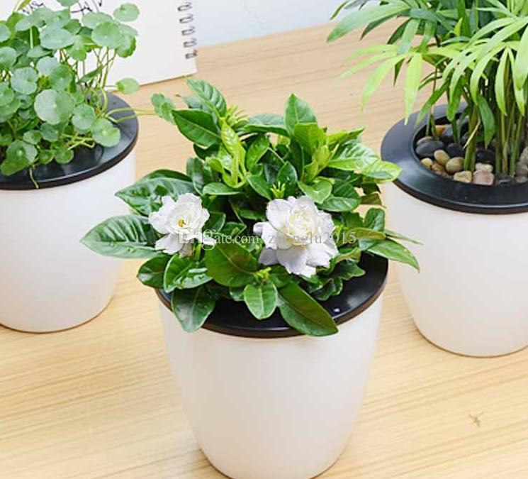 Elegant 2017 Gardenia Seeds Fragrant Four Seasons Evergreen Indoor Potted Balcony  Garden Pot Easy To Kind Of Green Plant Flowers From Zhenglu2015, $3.02 |  Dhgate.