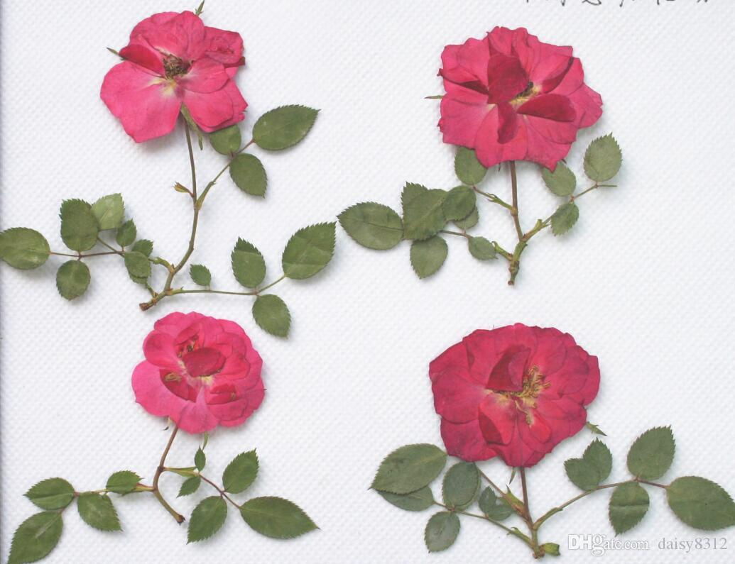 Red Pressed Dried Rose Flower With Branch&Leaf For Epoxy Resin Pendant Necklace Jewelry Making Craft DIY Accessories