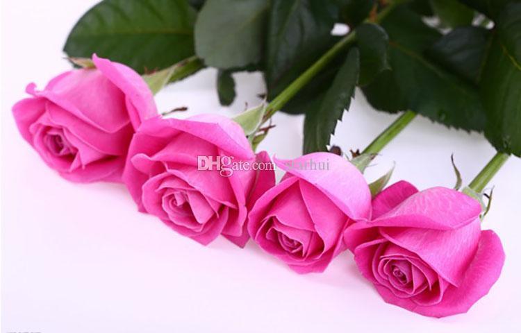 Rosen-Samen geben Verschiffen frei Bunte Regenbogen-Rosen-Samen-purpurrote rote Schwarz-weiße rosa gelbe grün-blaue Rosen-Samen / bag WX-P01