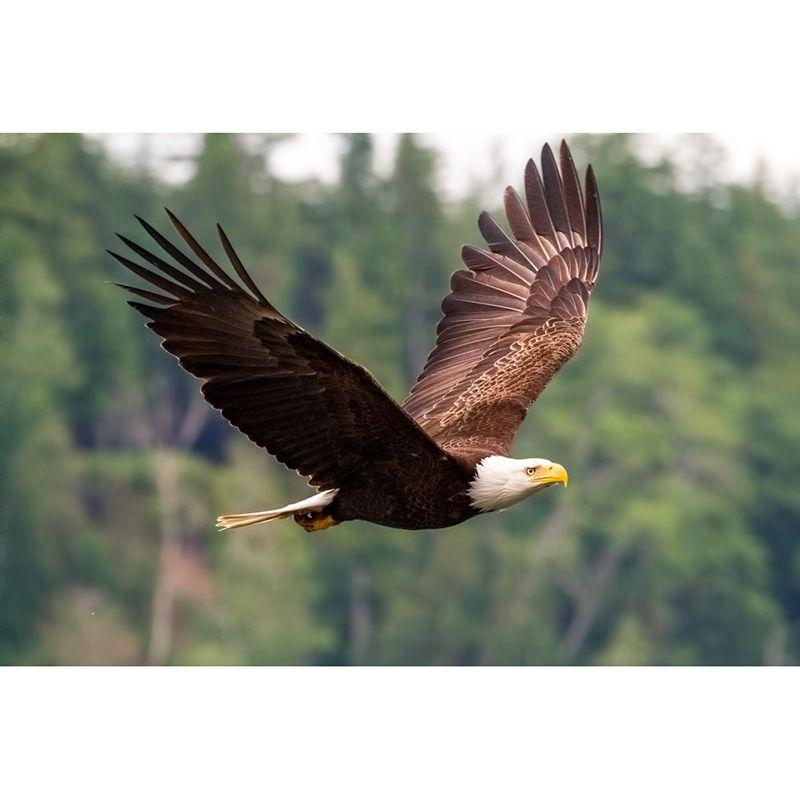 Satın Al Kel Kartal Uçan Kuş Diy Elmas Boyama Nakış 5d çapraz Dikiş