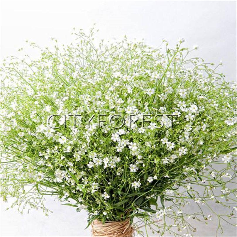 Flower Bed Maintenance Cost: 2019 1000 Gypsophila Elegant White Flower Seeds Baby'S