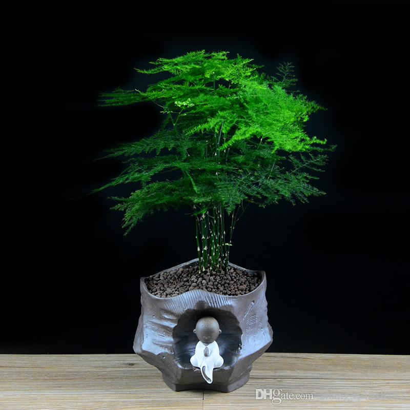5 particlebag asparagus fern seeds asparagus setaceus small bamboo bonsai setose asparagus plants diy mini pot plant from