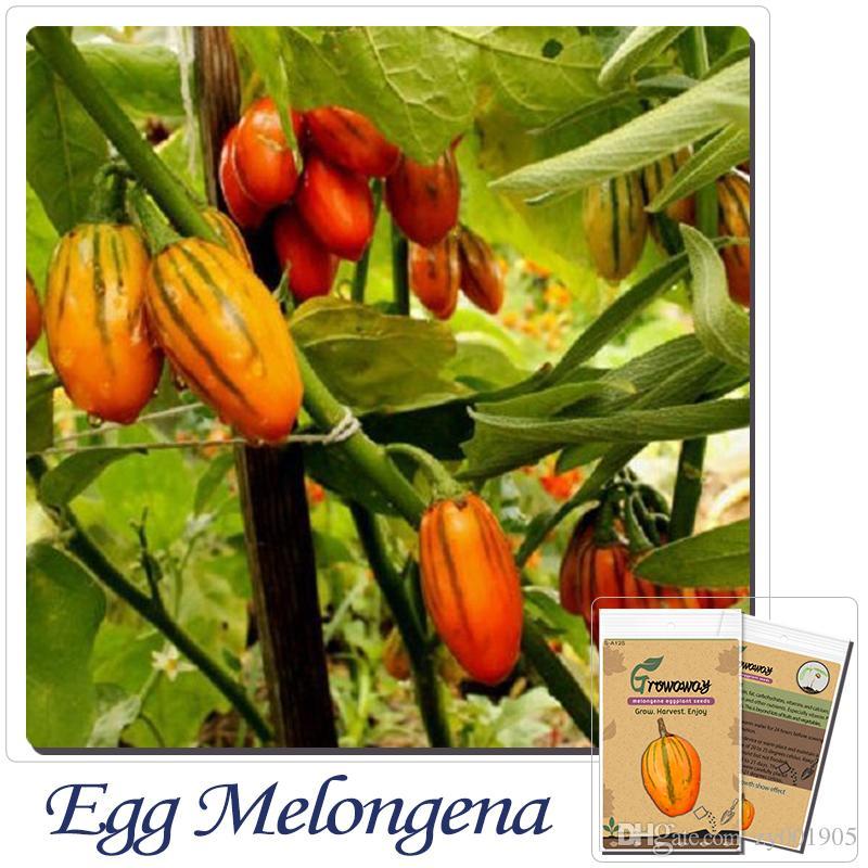 Online Cheap Fruits Vegetables Seeds Melongene Seeds Solanum ...