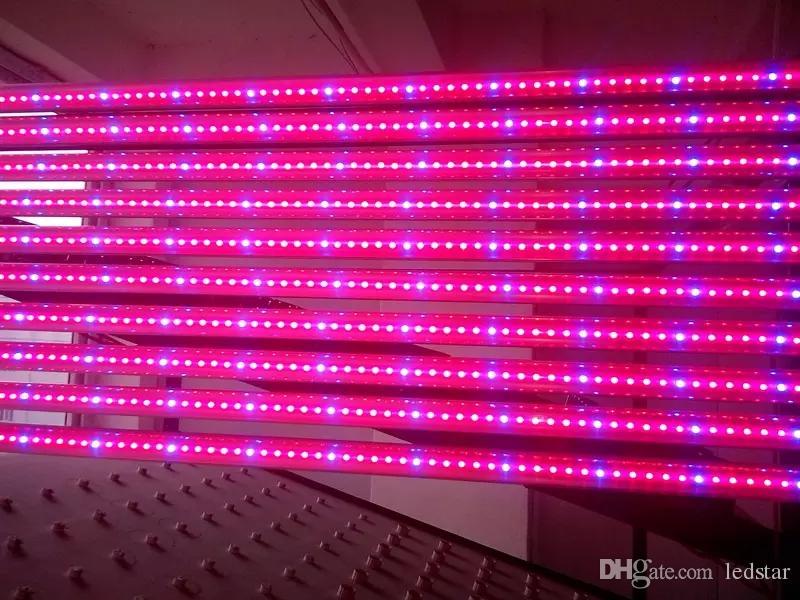 T8 LED Grow Tube 4ft 1.2M 12.7W 18W Good Yield Plant Crecen proporciones razonables de rojo y azul para sistemas de hidroponía de crecimiento de plantas de interior