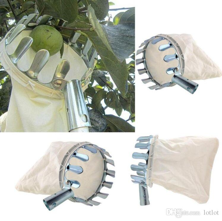 Bequemer gartenbaulicher Obstpflücker, der für Apfel-Birnen-Pfirsich-Ernte-Werkzeuge-Obstgarten-Garten-Werkzeug-Metallobstpflücker im Garten arbeitet