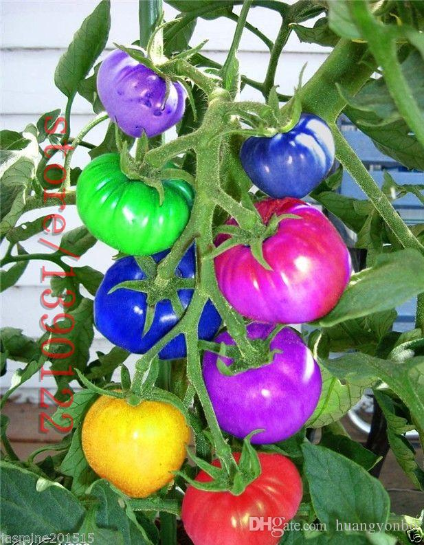 50 adet / torba gökkuşağı domates tohumları, nadir domates tohumları, bonsai organik sebze meyve tohumları, saksı bitki ev için bahçe