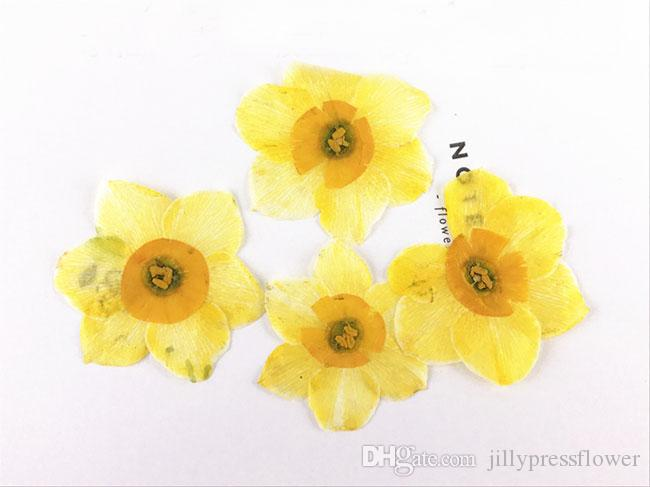 2018 Dye Absorption Narcissus Framed Dried Flowers 4CM Diameter, DIY Pressed Flowers For Epoxy Cell Phone Free Shipment
