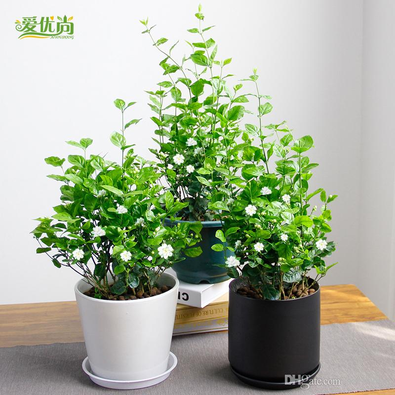2018 Small Indoor Flowers Seeds Potting Balcony Beauty