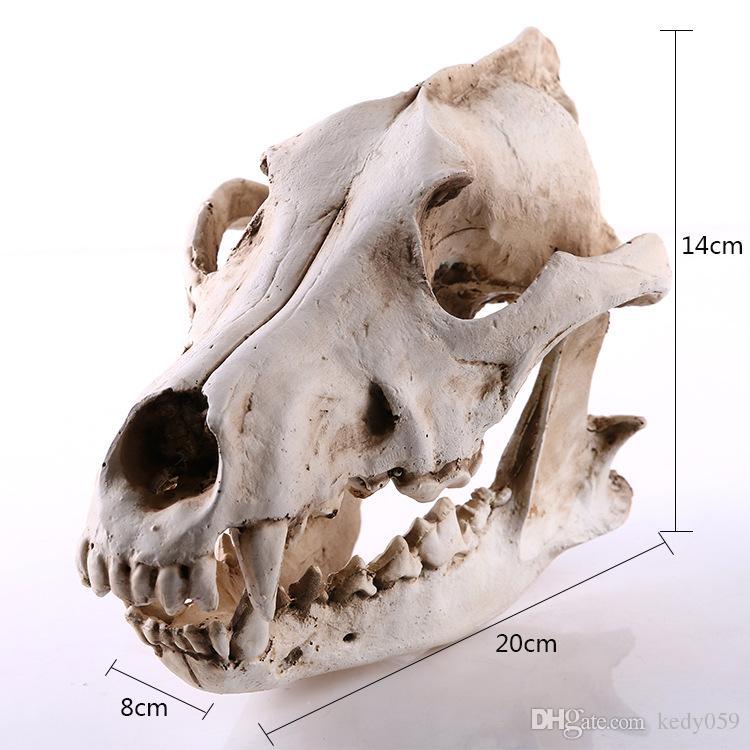 chacal loup résine modèle de crâne enseignement spécimen art résine squelette animal halloween anniversaire cadeau fête décor à la maison art artisanat bar