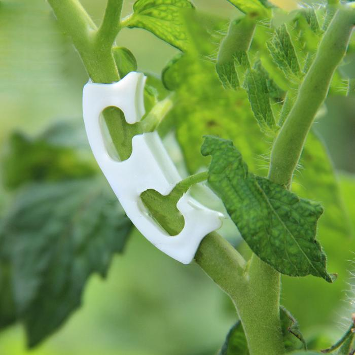 Wholesale Plastic Fixture for Tomatos and Cherry Farming Planting Tools easy Operating Cheap Tomato Stem Lock