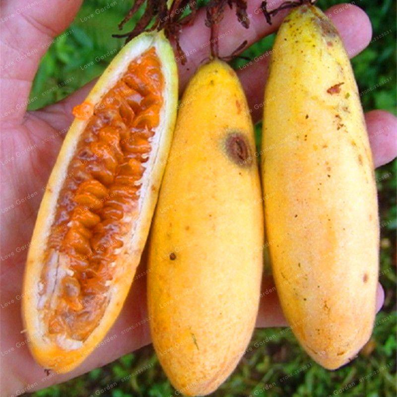 2018 Passiflora Banana...