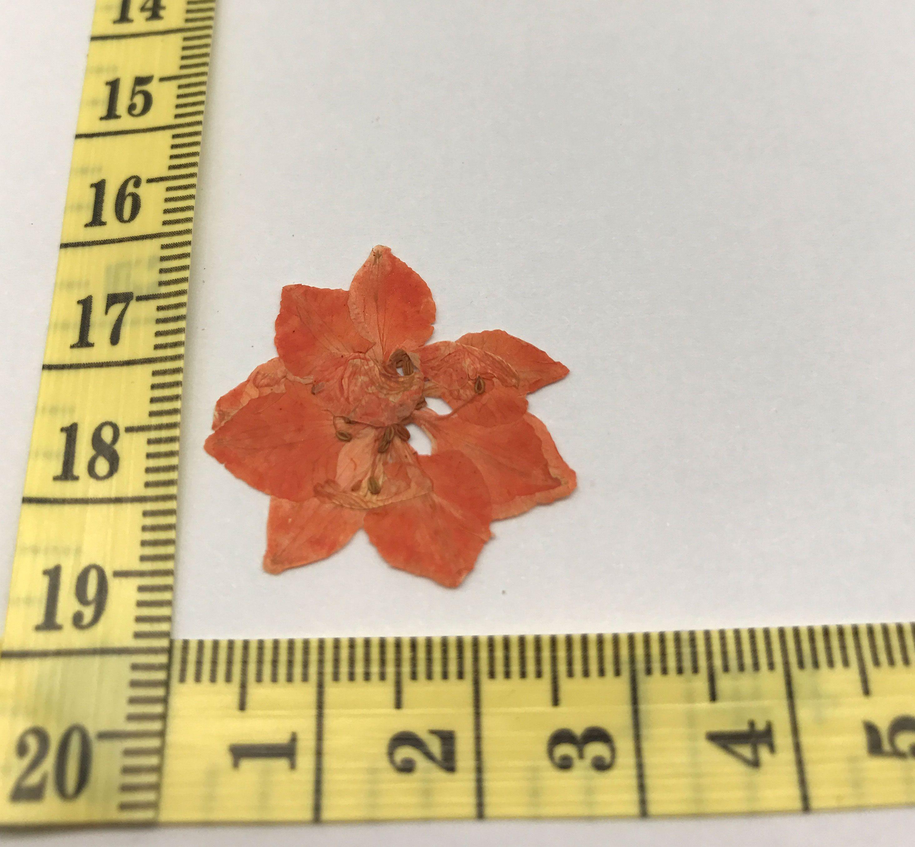Dyed Orange Larkspur Christmas Flowers Decorations Press Flower ...