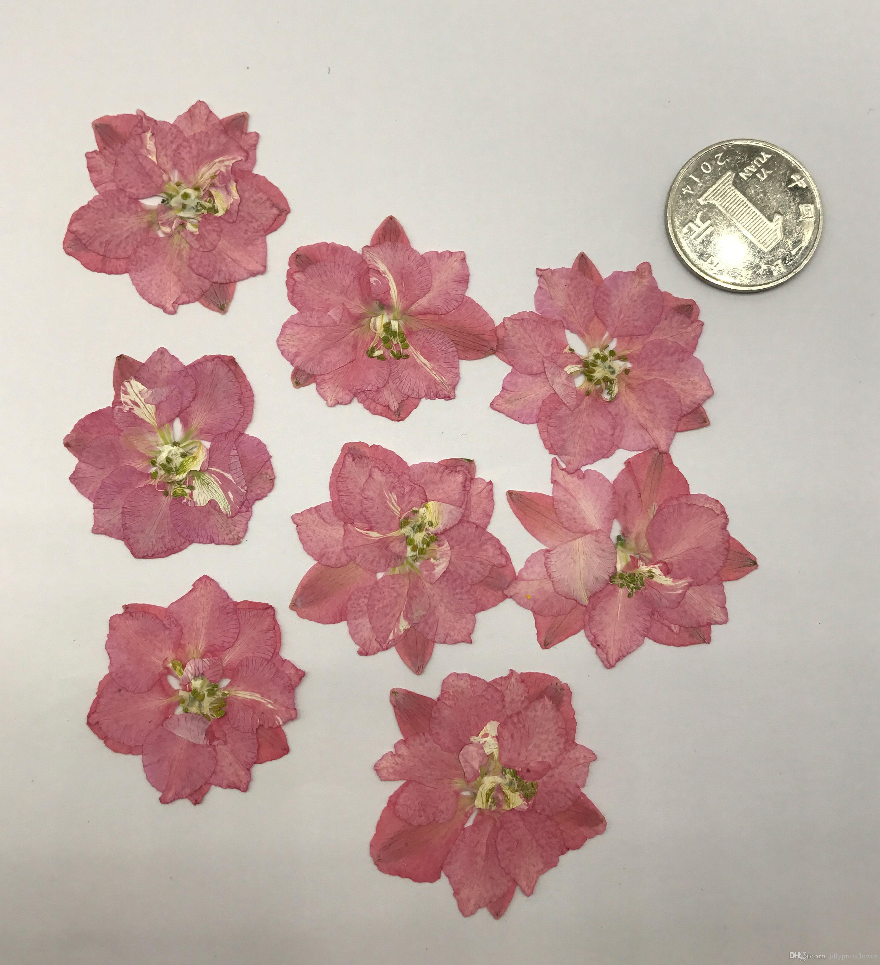 Original Pink Large Larkspur Press Flower Dia. 3CM For Candle ...