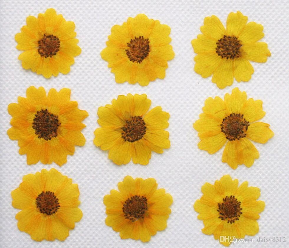 25mm Pressed Dried Chrysanthemum Flower Dry Plants For Epoxy Resin Pendant Necklace Jewelry Making Craft DIY Accessories