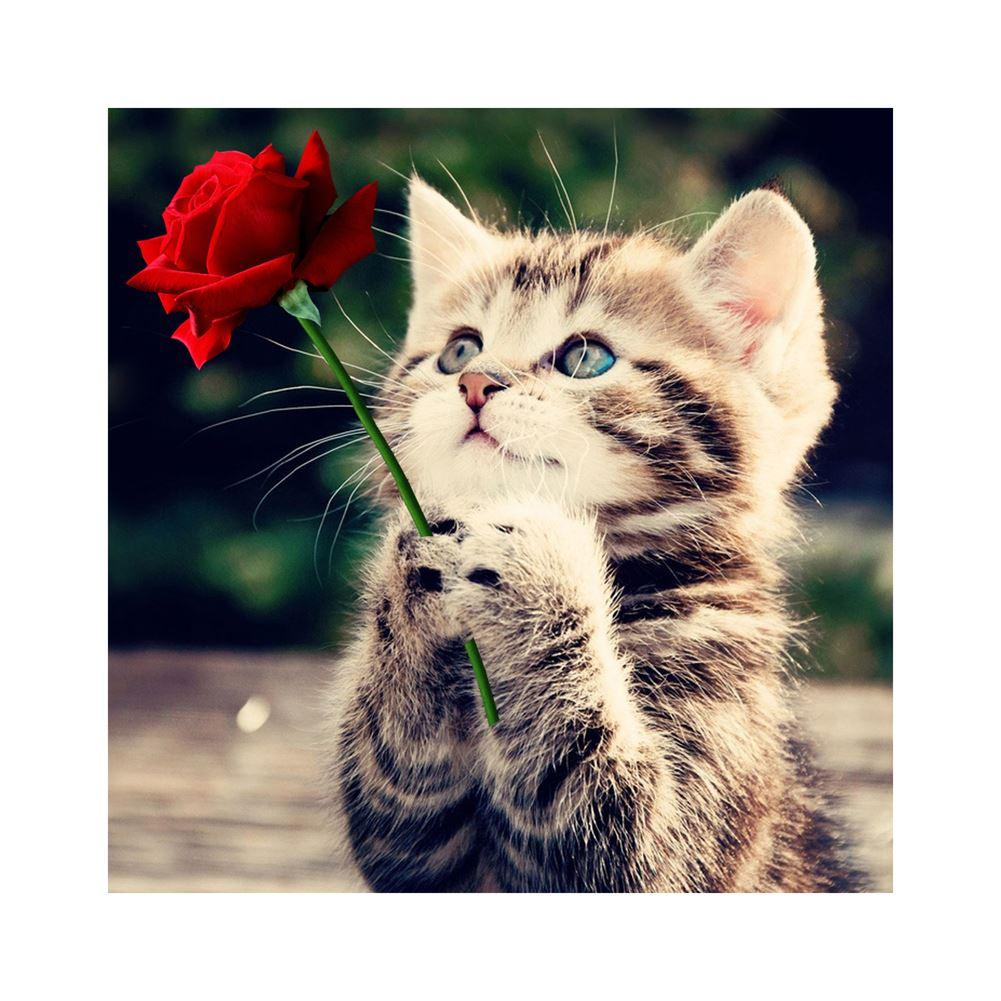 Handarbeiten Rote Rose Und Katze 5D Diamant Stickerei Malerei Tiere Quadrat Muster Strass Leinwand Kreuzstich Kunst Wohnkultur