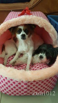 Pet Comfortable Sofa Dog Bed Dog House Home Kennel for Small and Large Dogs Pet Blanket Cushion Basket Sleeping