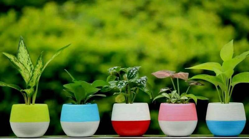Gartenblumentöpfe Kleine Mini Bunte Kunststoff Kindergarten Blumentöpfe Garten Deko Gartenwerkzeug 100 stücke Freies verschiffen