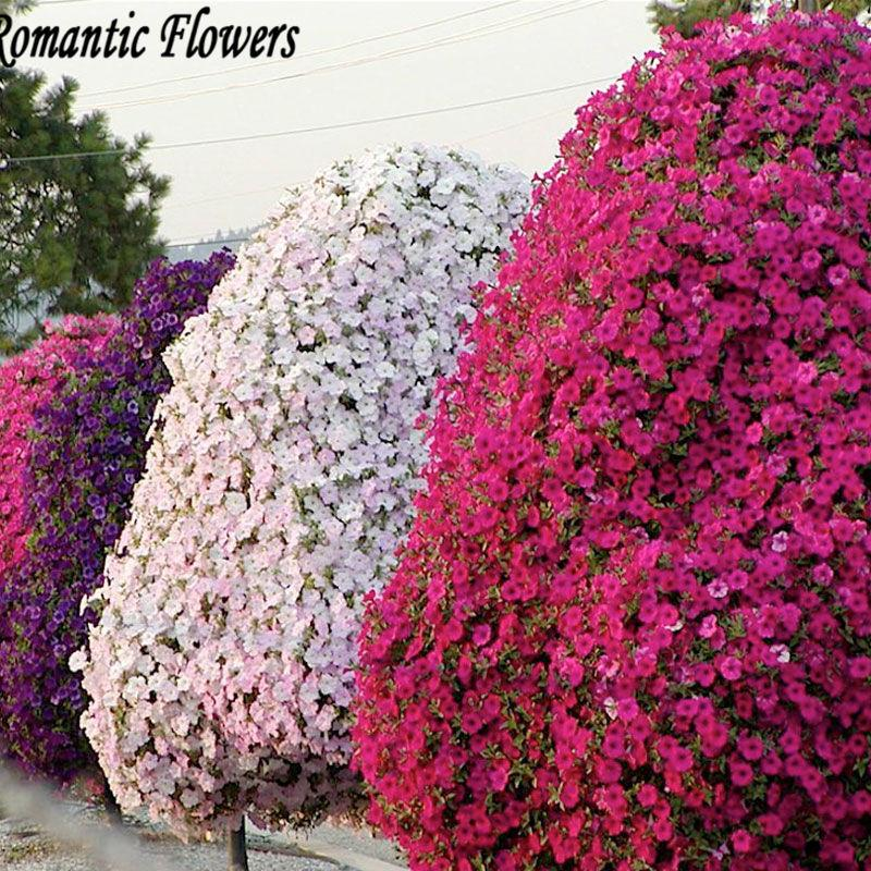 Flower Bed Maintenance Cost: 2019 Wholesale200 Rare Petunia Tree Seeds Rare Seeds For