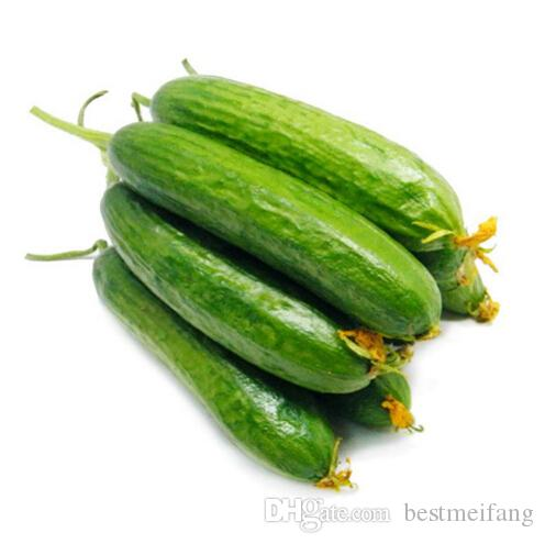 20 Mouth crisp cucumber seeds of new varieties of fruits and vegetables, whole female seed salad,