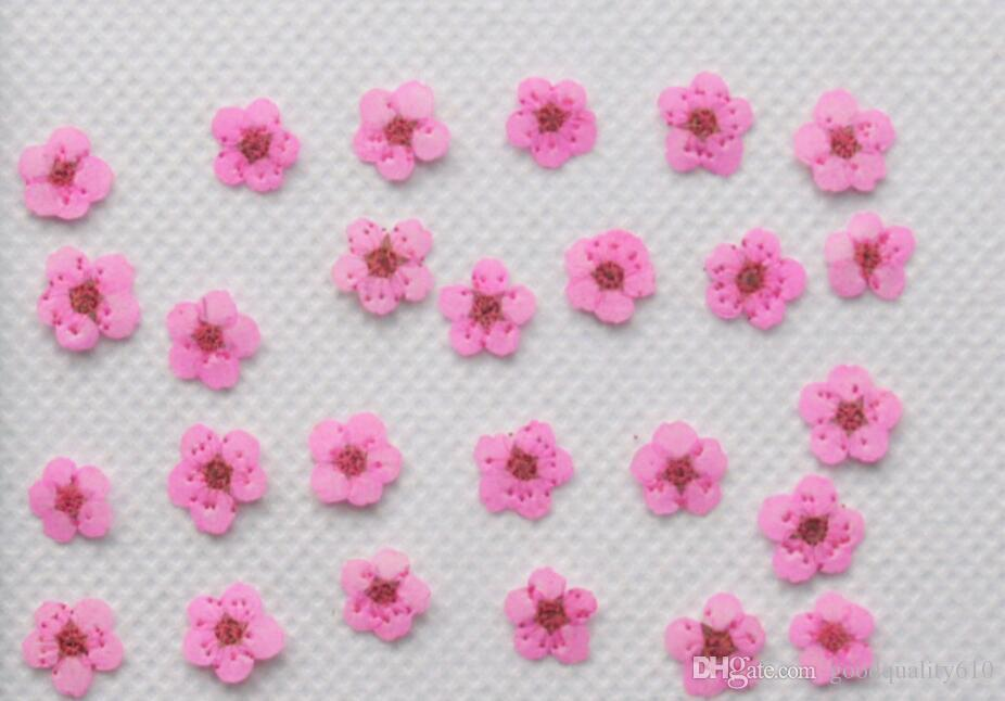 Pressed Dried Plum Blossom Flower Dry Plants For Epoxy Resin Pendant Necklace Jewelry Making Nail art Craft DIY Accessories