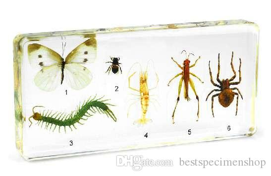 Cricket Specimen Acrylic Resin Embedded Cricket Playing Toys&Gifts Transparent Mouse Paperweight Type Kids Biology Learning& Education Kits