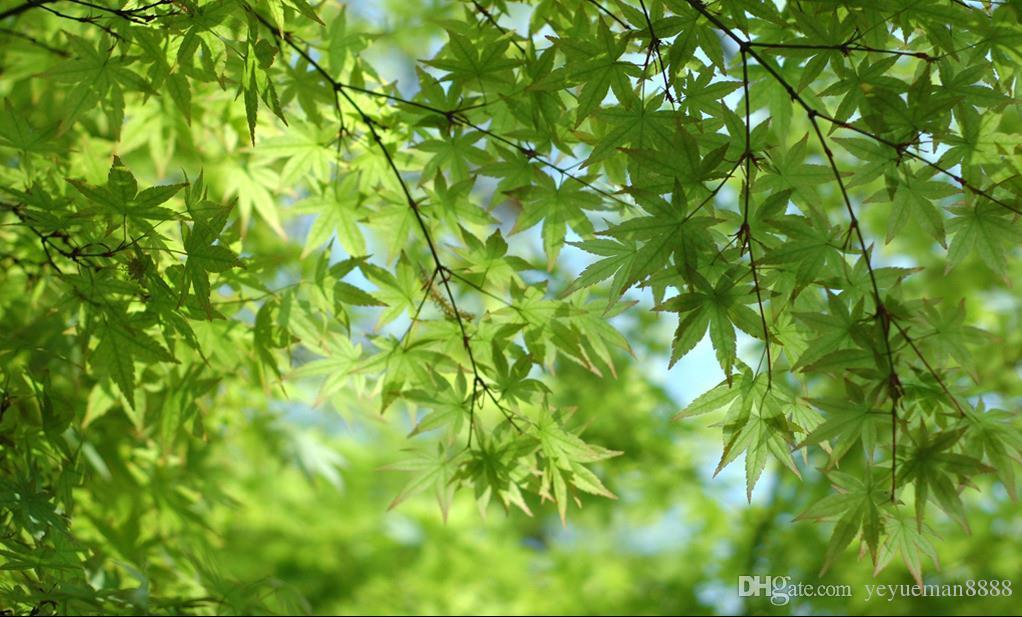 benutzerdefinierte 3d foto decke wandbild blauer himmel und weiße wolken taube grün lea deckentapeten für wohnzimmer 3d decke tapete