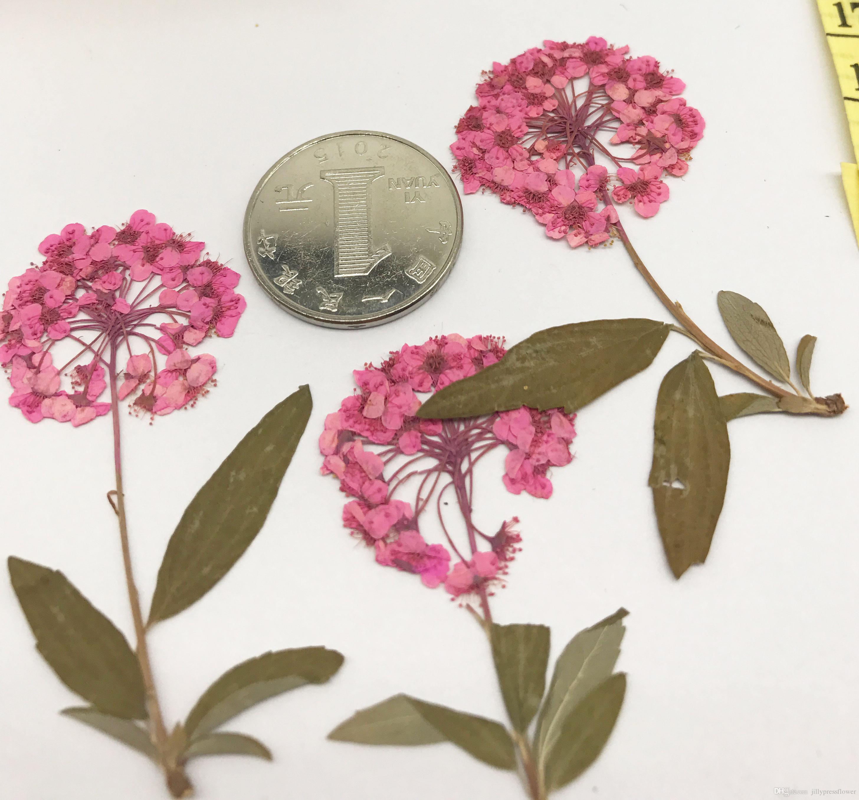 2018 2017 Pink Color Alyssum Flowers Dried Flower Diy Phone Case