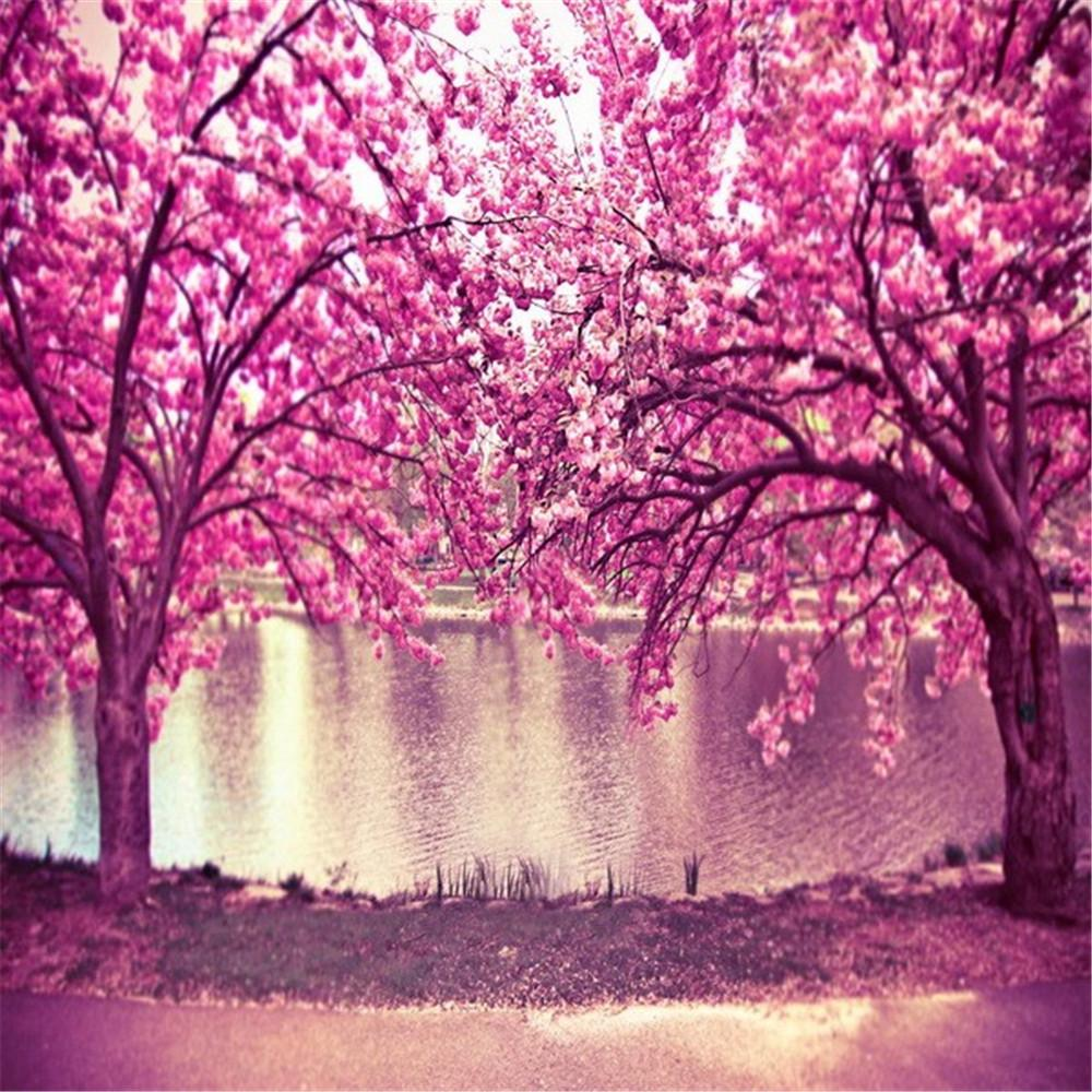 2019 Pink Cherry Blossom Trees Flowers Photo Background Spring