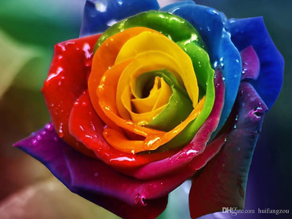Hot Sale Beautiful Rose Seeds Rainbow Purple Red Blue Green Burgundy ...